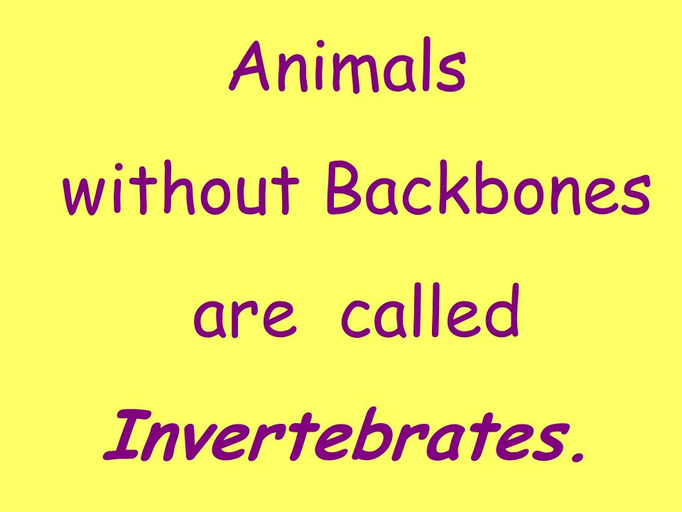 Animals without Backbones are called Invertebrates.