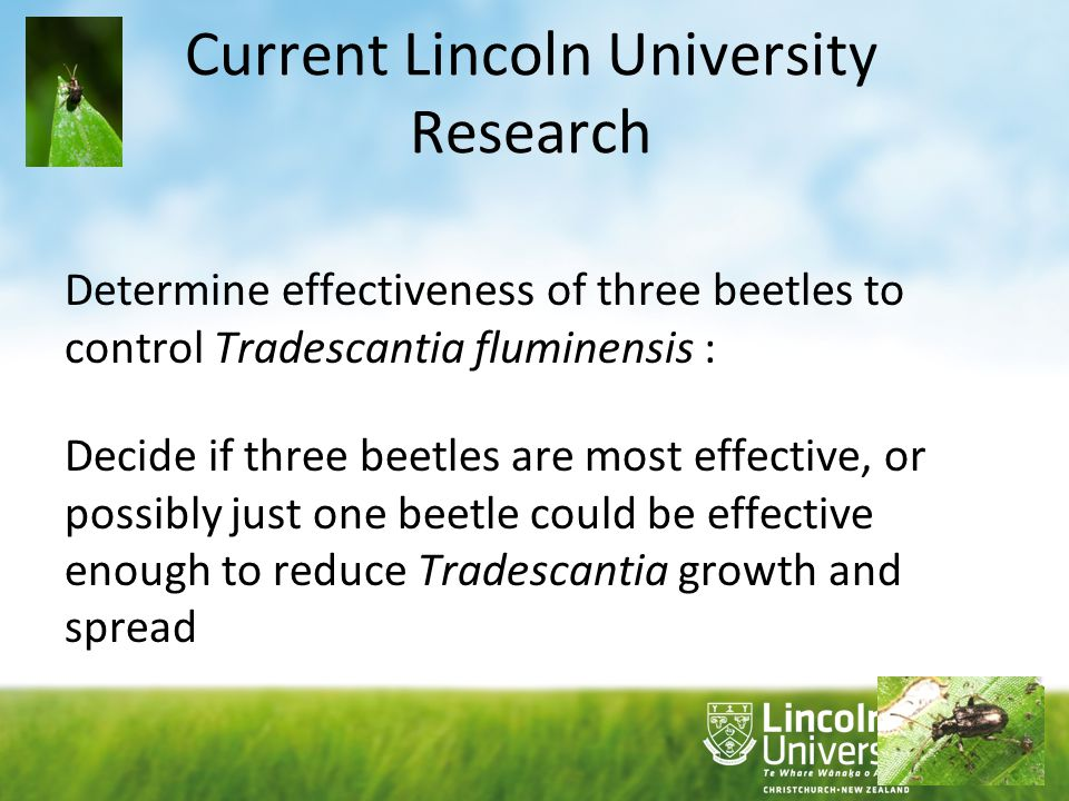 Current Lincoln University Research