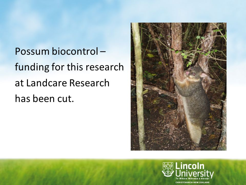 Possum biocontrol – funding for this research at Landcare Research has been cut.