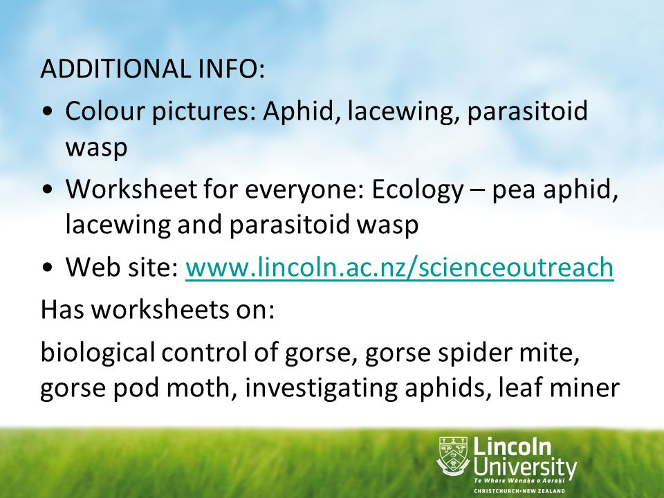 ADDITIONAL INFO: Colour pictures: Aphid, lacewing, parasitoid wasp. Worksheet for everyone: Ecology – pea aphid, lacewing and parasitoid wasp.