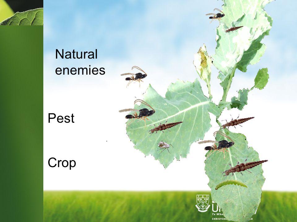 Natural enemies Pest Crop
