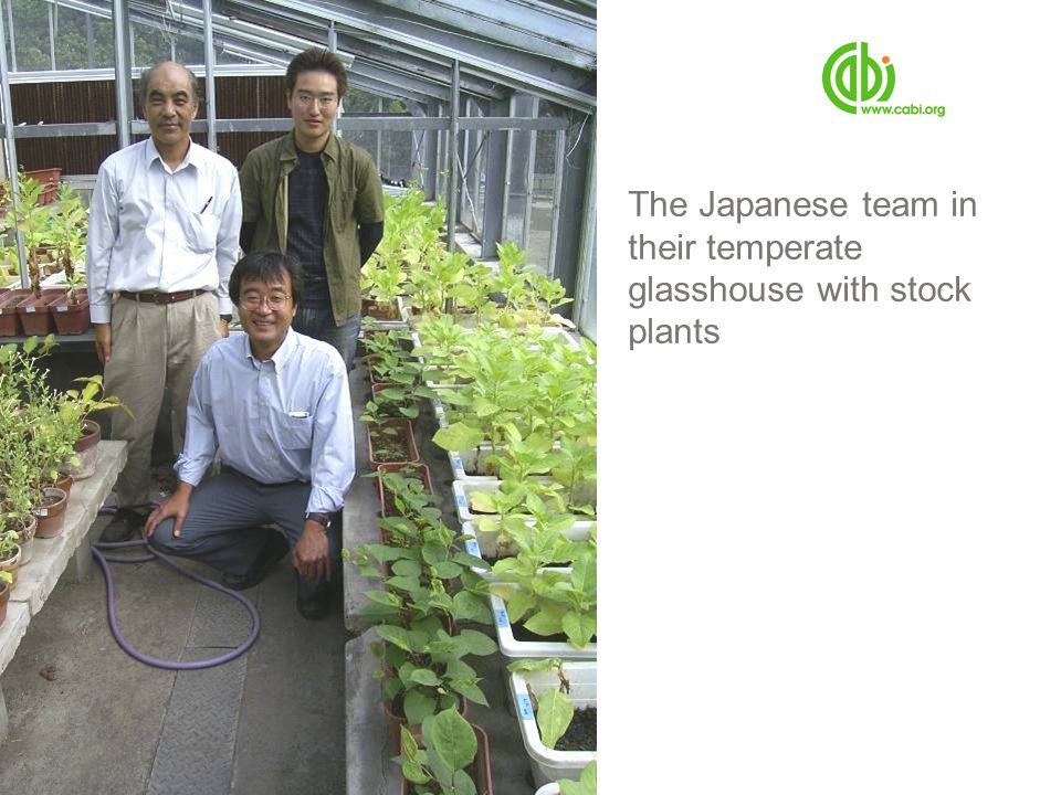 The Japanese team in their temperate glasshouse with stock plants