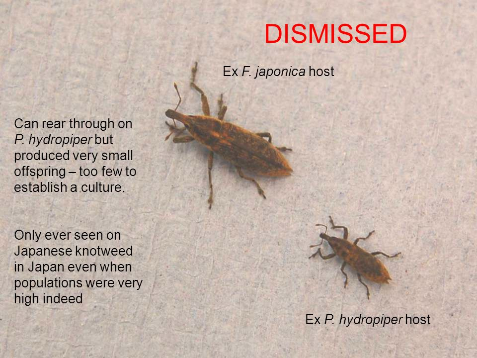 DISMISSED Ex F. japonica host