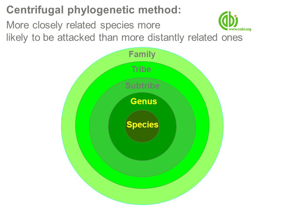 Centrifugal phylogenetic method: