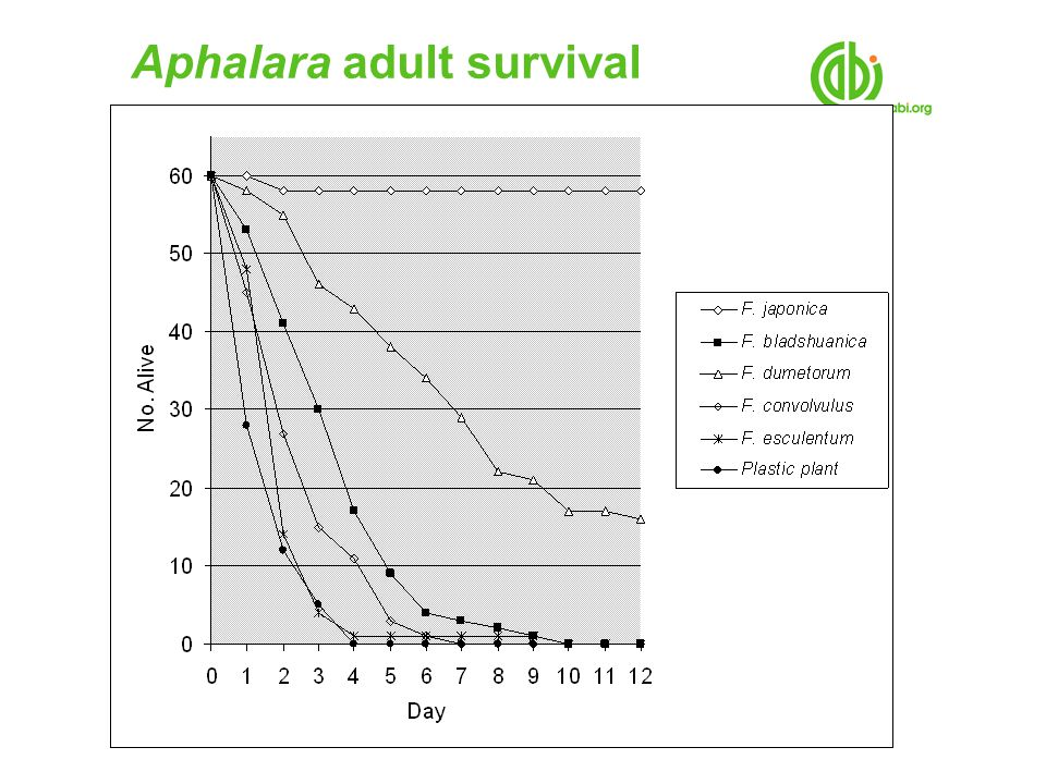 Aphalara adult survival