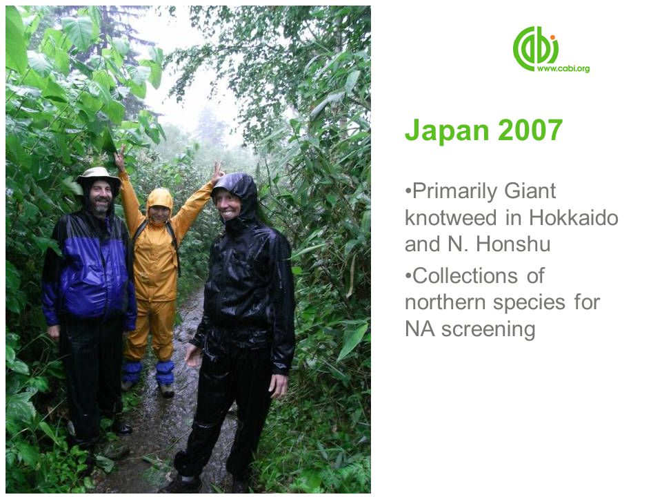 Japan 2007 Primarily Giant knotweed in Hokkaido and N. Honshu