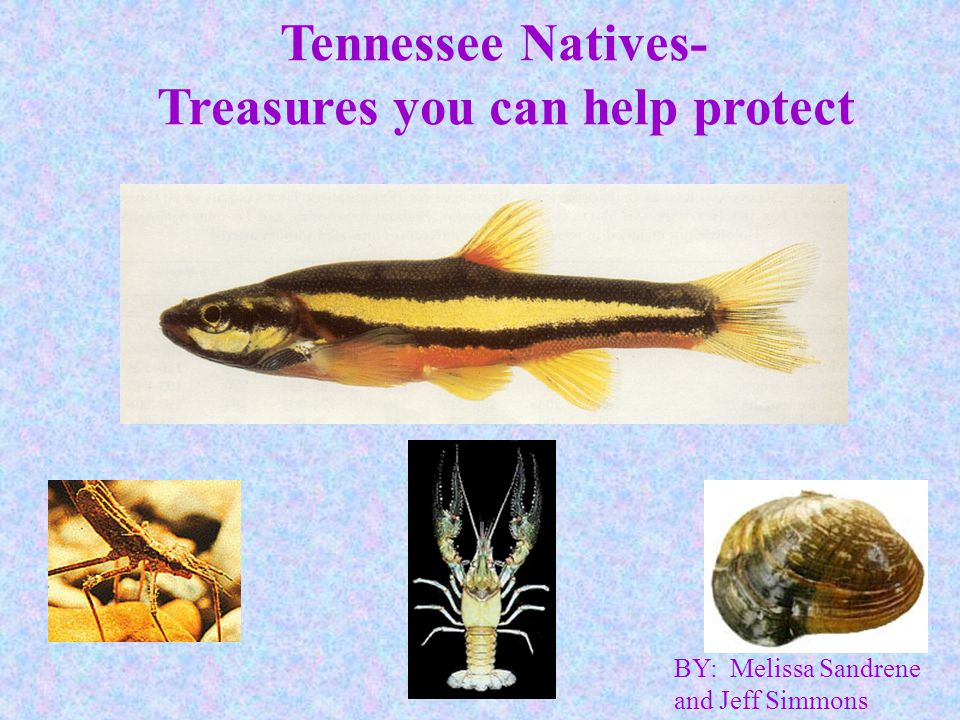 Treasures you can help protect