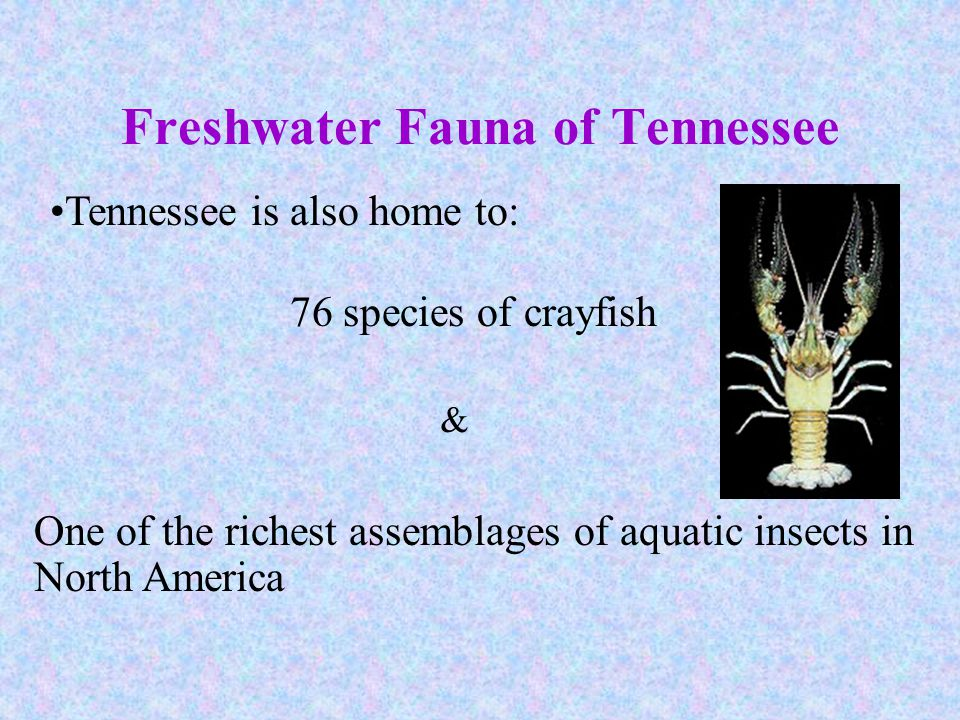 Freshwater Fauna of Tennessee