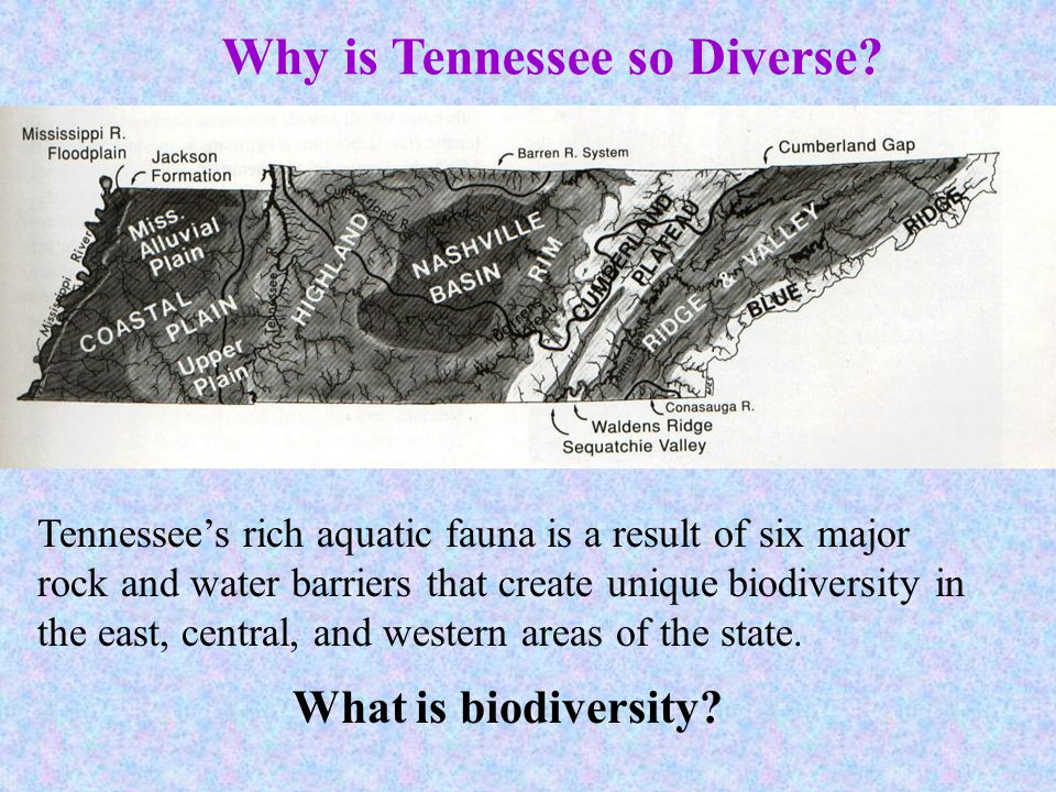 Why is Tennessee so Diverse