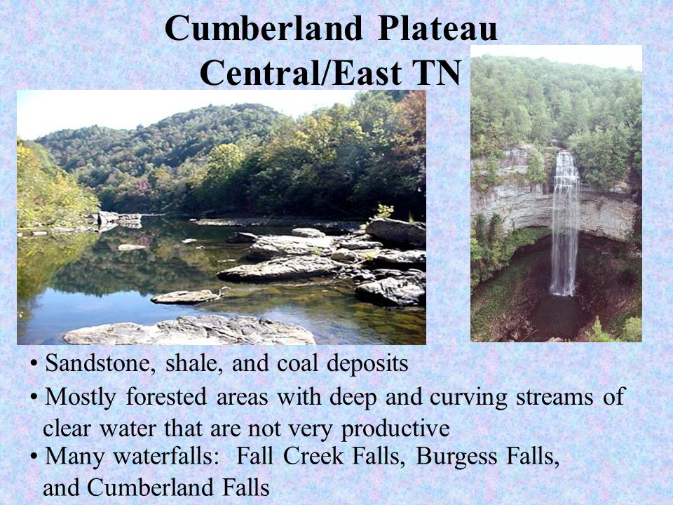 Cumberland Plateau Central/East TN