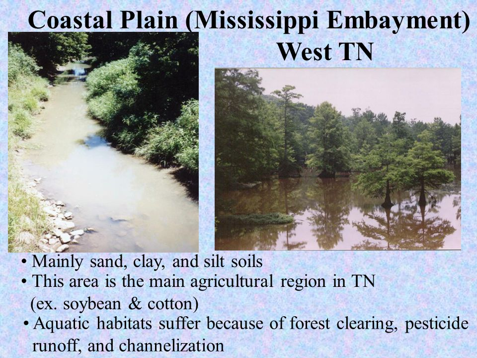 Coastal Plain (Mississippi Embayment)