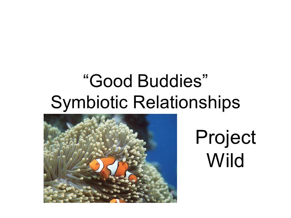 Good Buddies Symbiotic Relationships