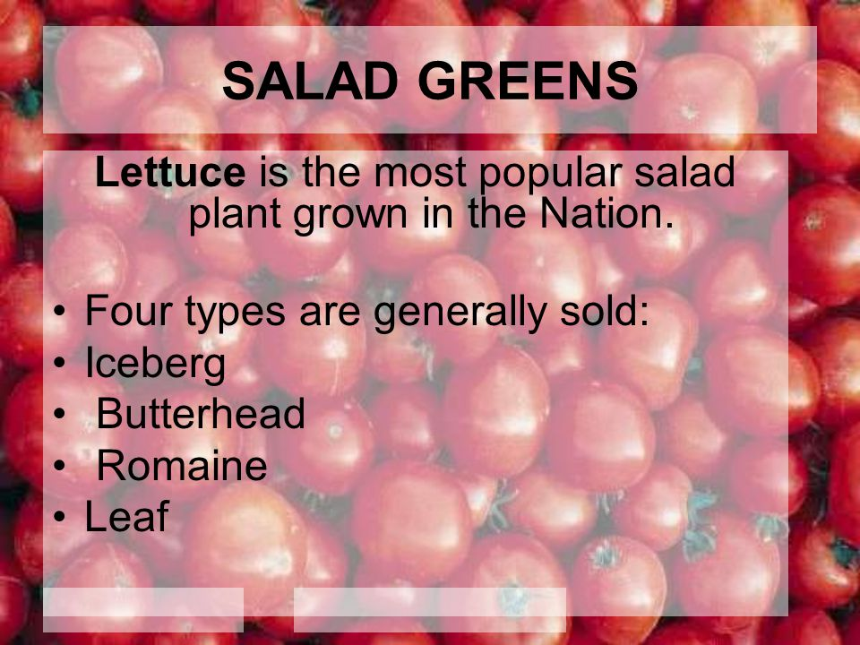Lettuce is the most popular salad plant grown in the Nation.