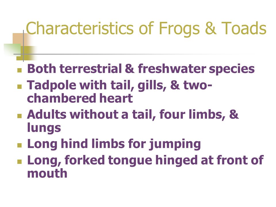 Characteristics of Frogs & Toads