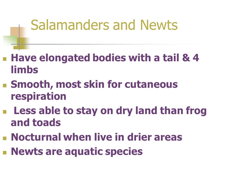 Salamanders and Newts Have elongated bodies with a tail & 4 limbs