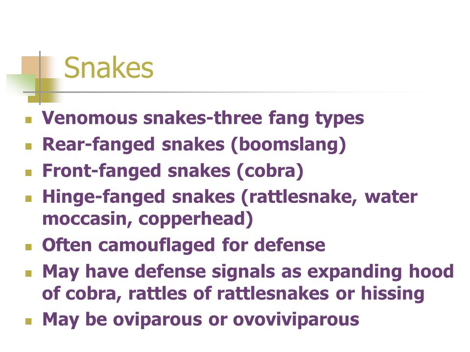Snakes Venomous snakes-three fang types Rear-fanged snakes (boomslang)