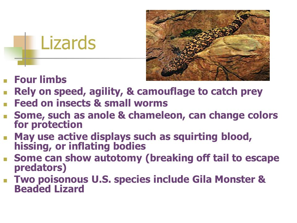Lizards Four limbs Rely on speed, agility, & camouflage to catch prey