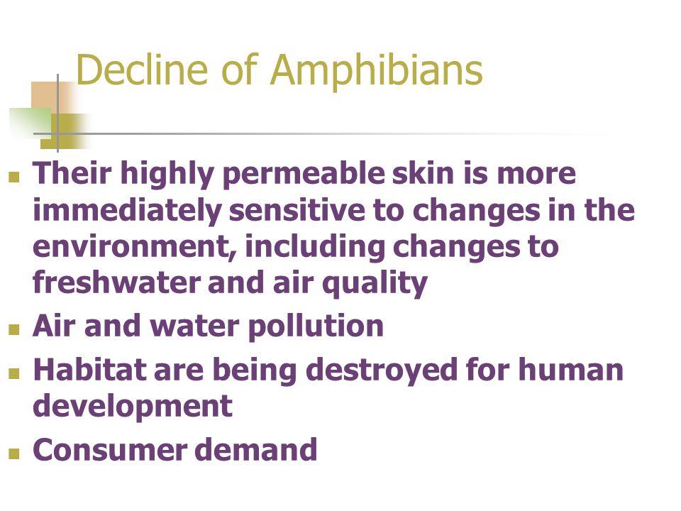 Decline of Amphibians
