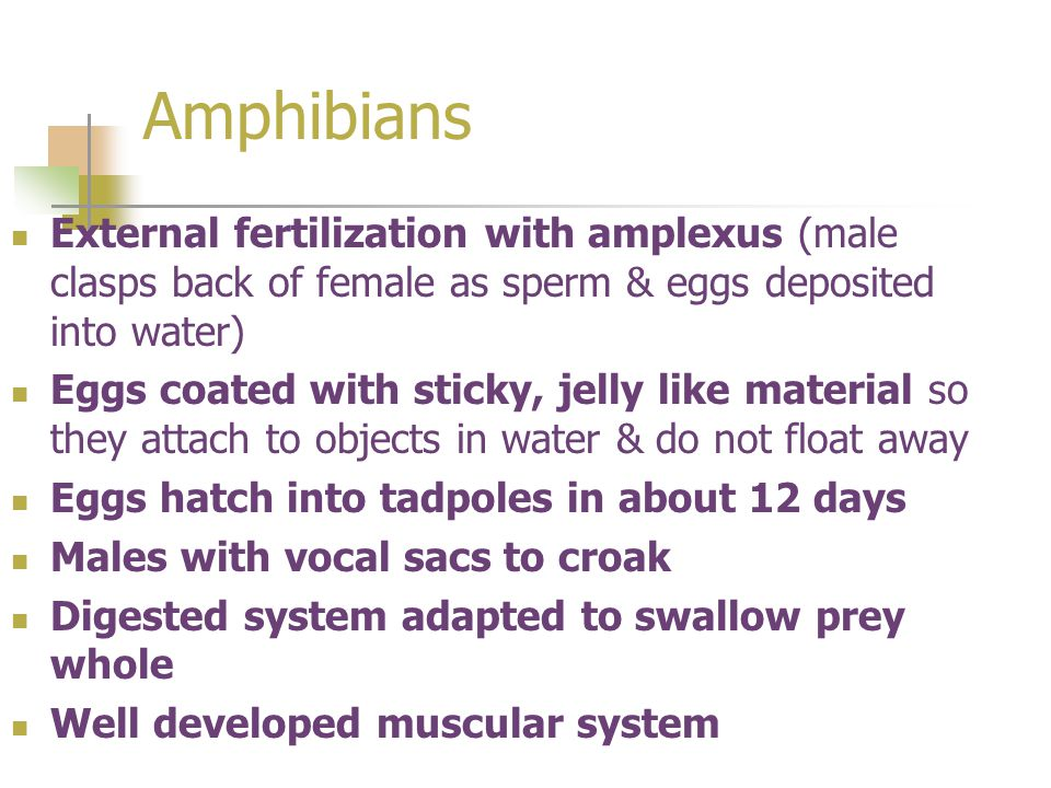Amphibians External fertilization with amplexus (male clasps back of female as sperm & eggs deposited into water)