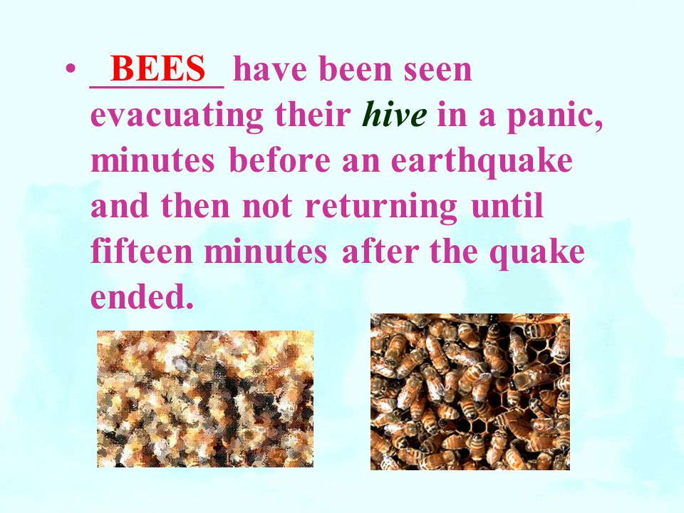 _______ have been seen evacuating their hive in a panic, minutes before an earthquake and then not returning until fifteen minutes after the quake ended.