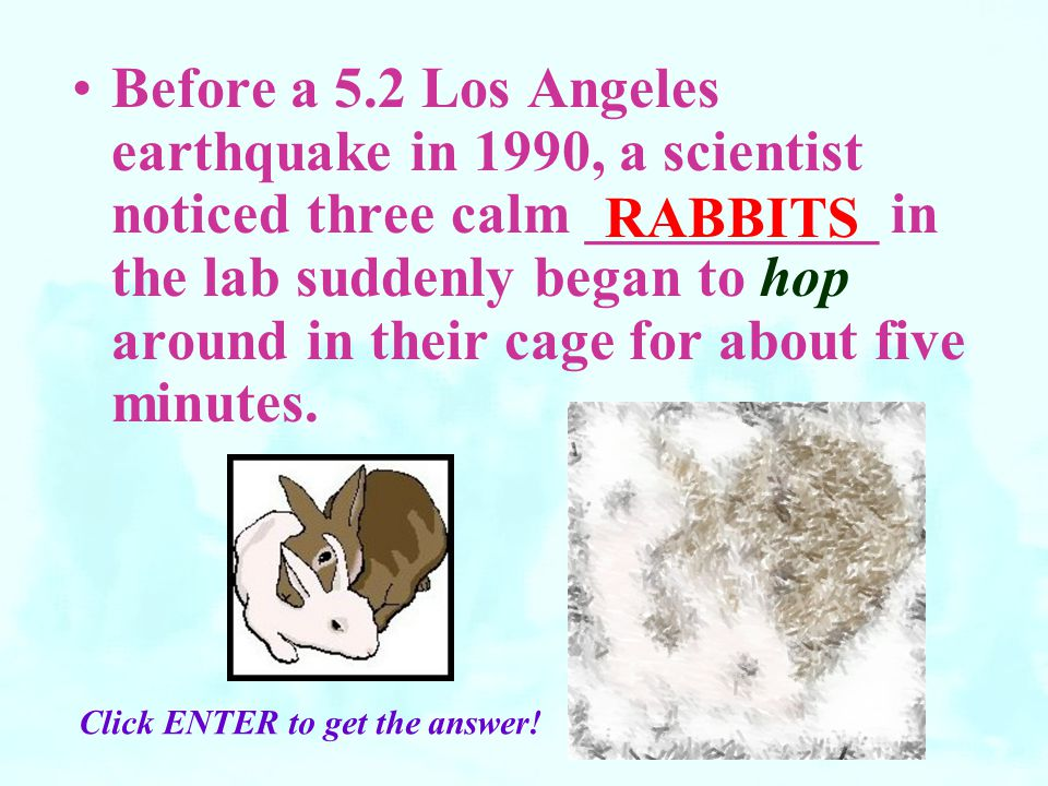 Before a 5.2 Los Angeles earthquake in 1990, a scientist noticed three calm __________ in the lab suddenly began to hop around in their cage for about five minutes.