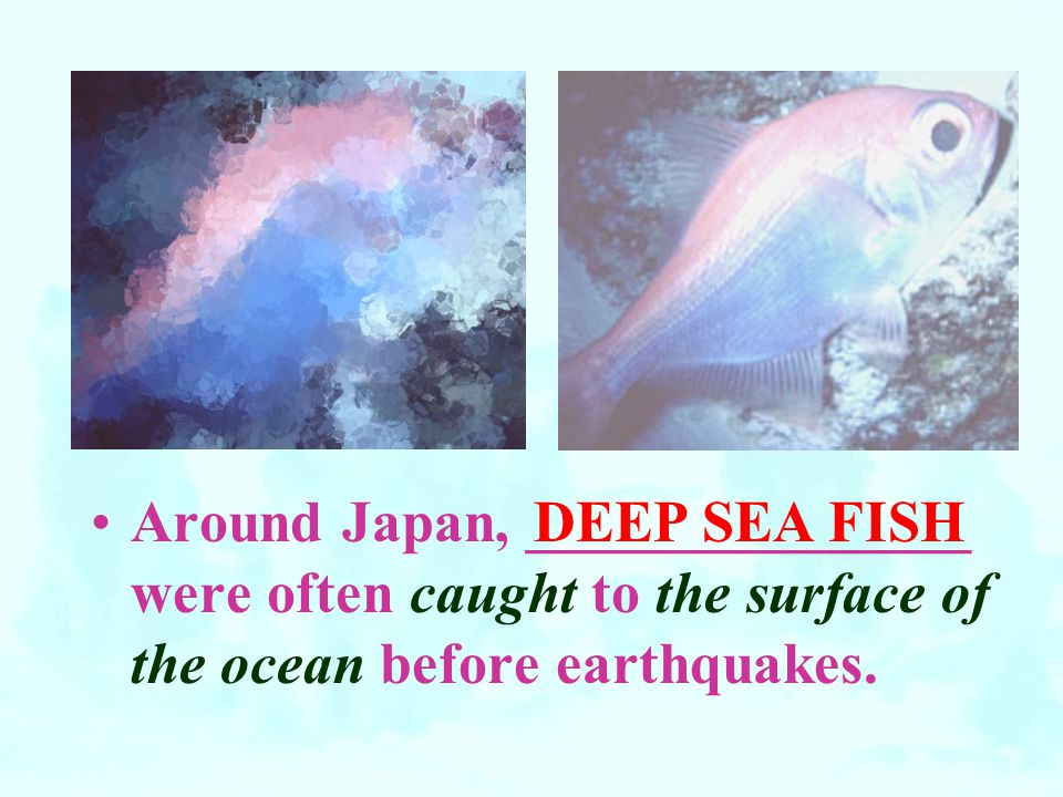 Around Japan, _______________ were often caught to the surface of the ocean before earthquakes.