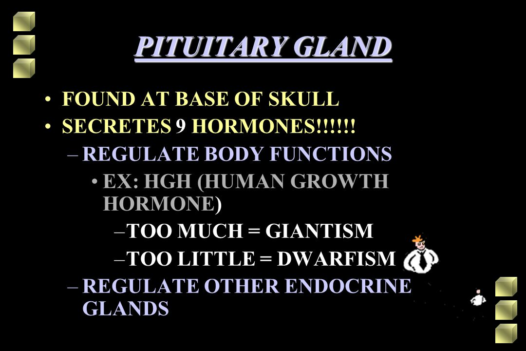 PITUITARY GLAND FOUND AT BASE OF SKULL SECRETES 9 HORMONES!!!!!!