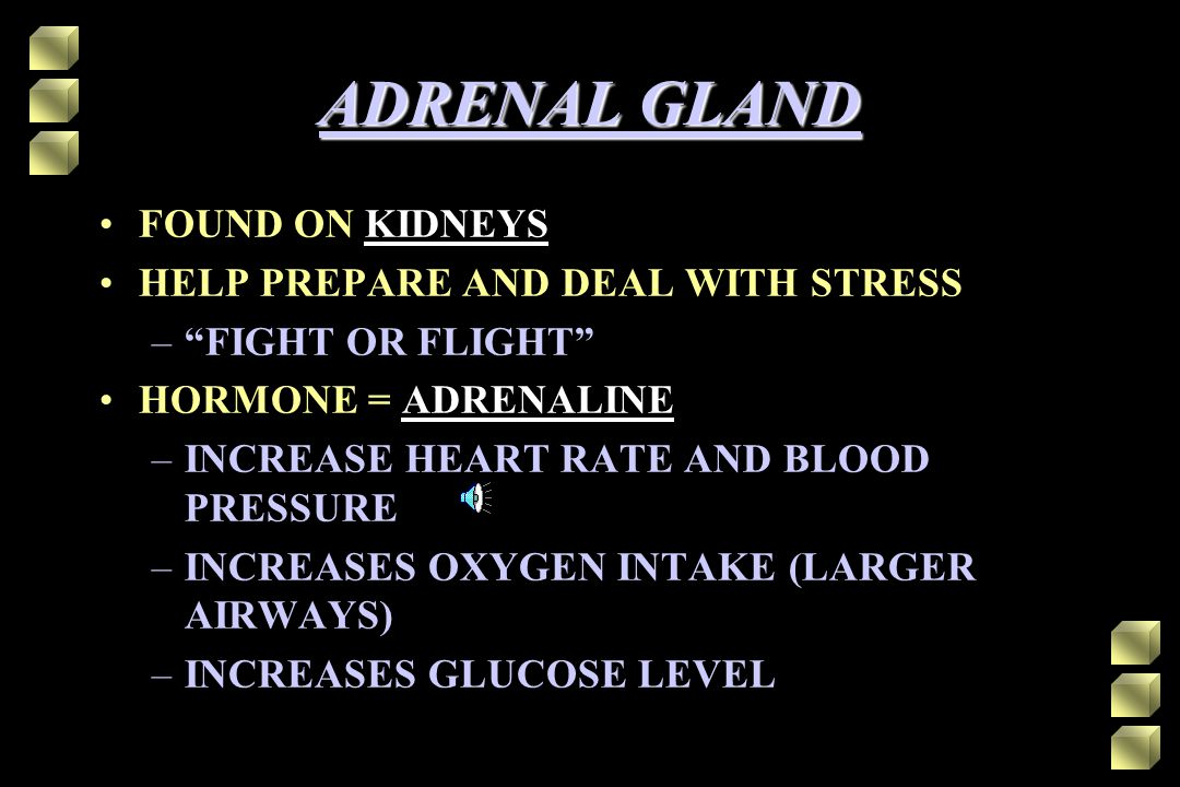 ADRENAL GLAND FOUND ON KIDNEYS HELP PREPARE AND DEAL WITH STRESS