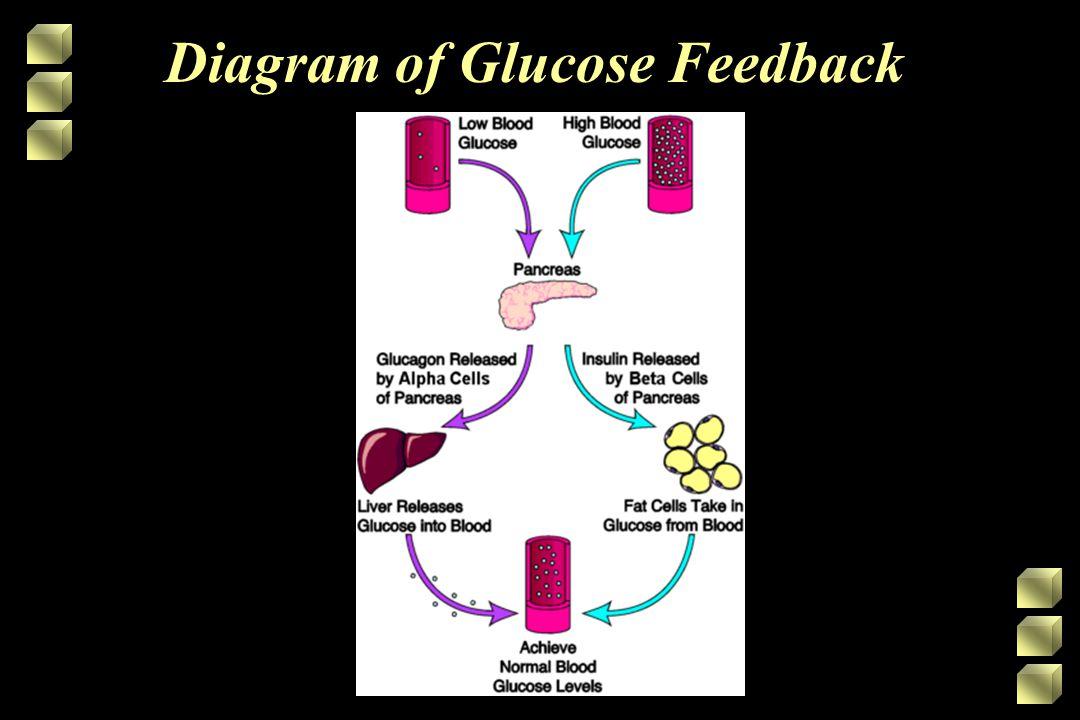 Diagram of Glucose Feedback