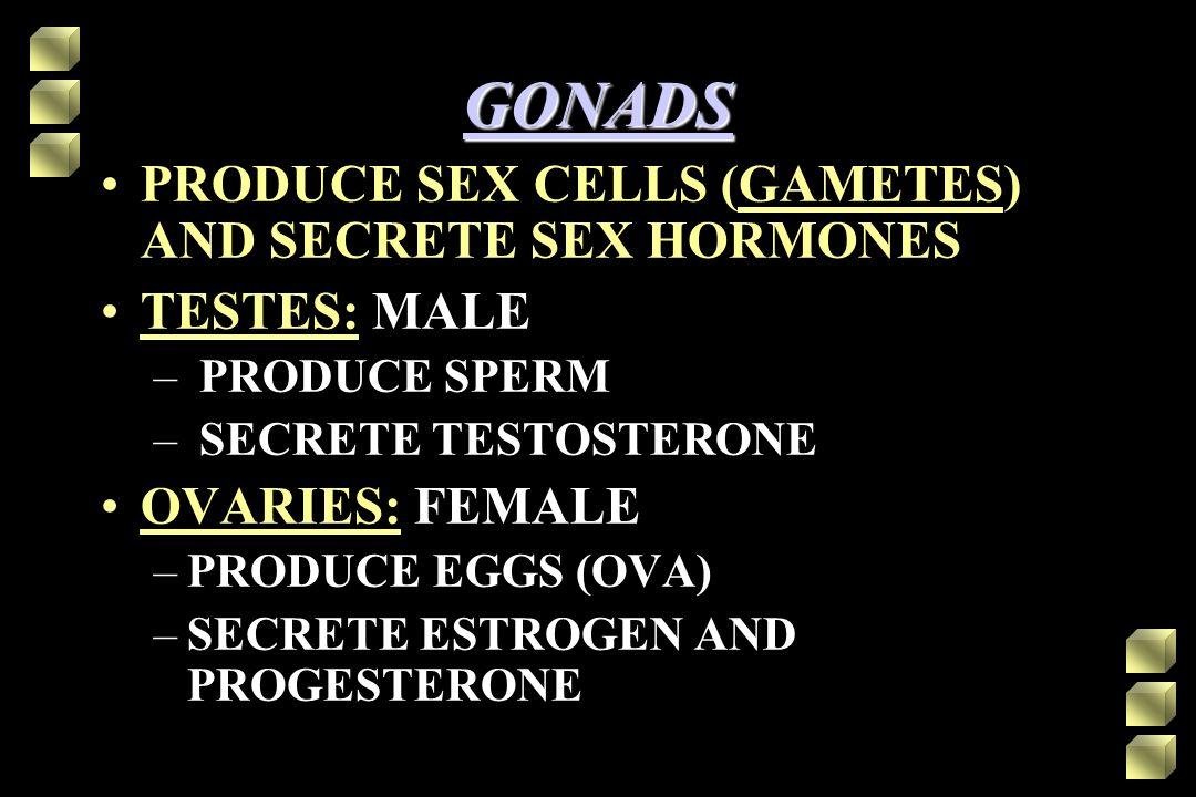 GONADS PRODUCE SEX CELLS (GAMETES) AND SECRETE SEX HORMONES