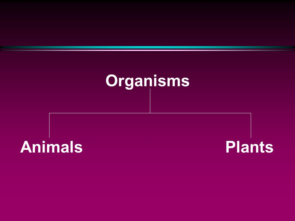 Organisms Animals Plants