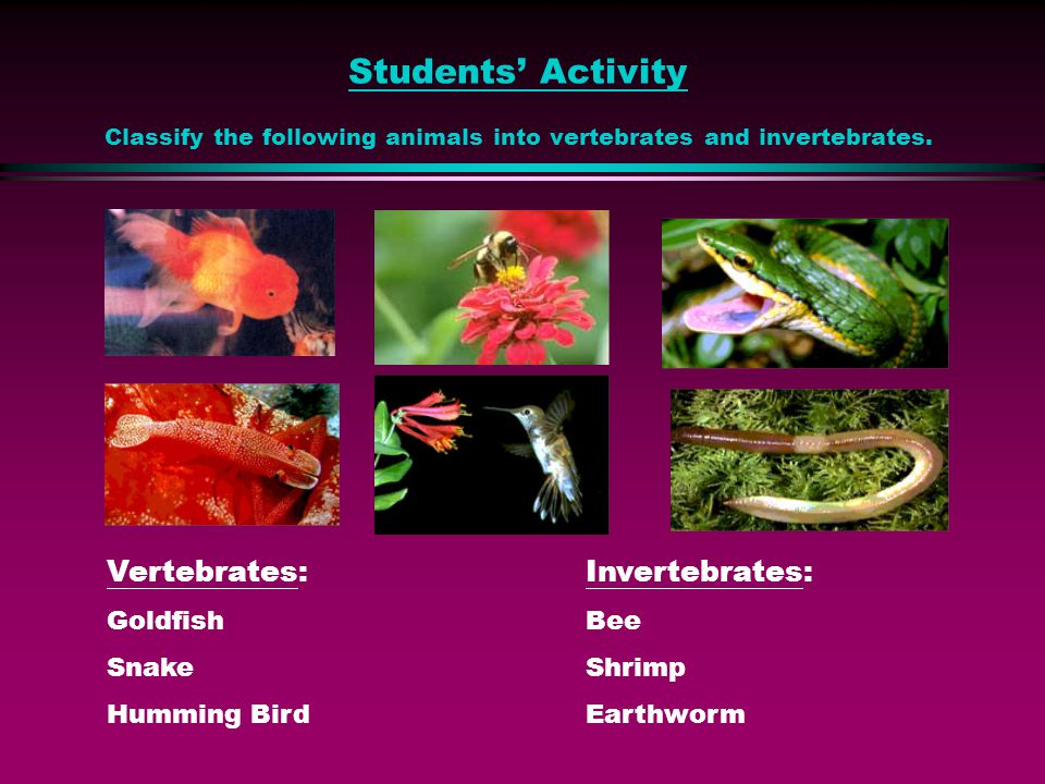 Students' Activity Classify the following animals into vertebrates and invertebrates.