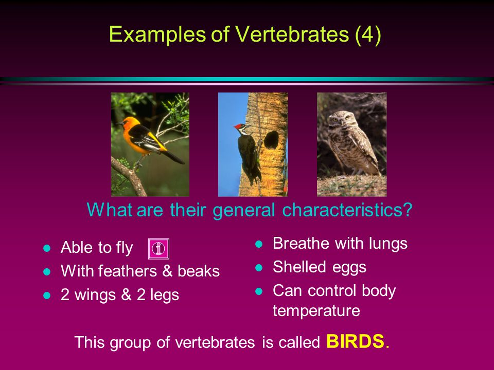 Examples of Vertebrates (4)