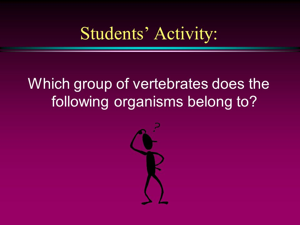 Which group of vertebrates does the following organisms belong to