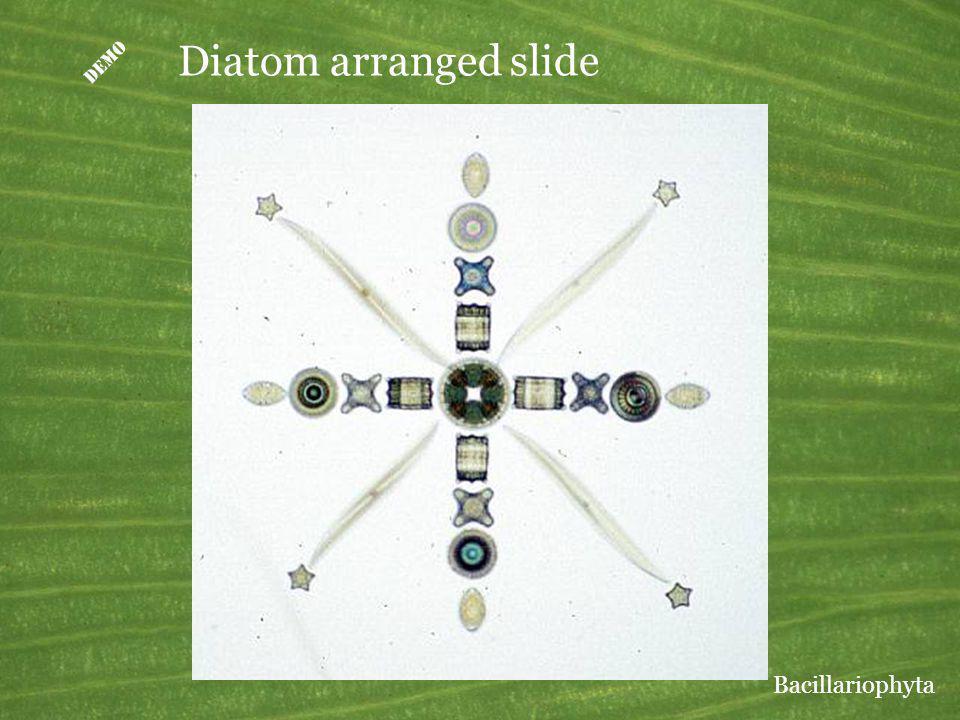 D Diatom arranged slide