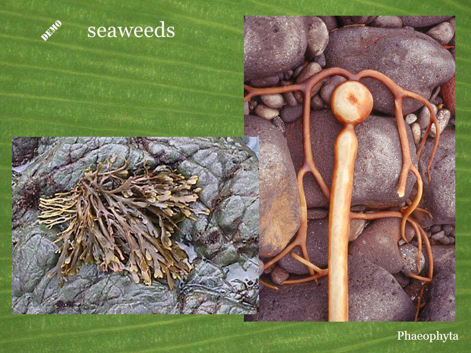 D seaweeds