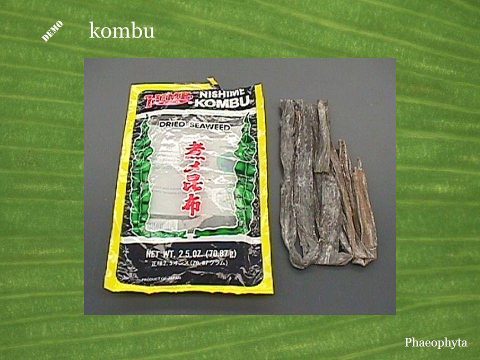 D kombu Kombu is a Laminaria used as food in Japan. Phaeophyta