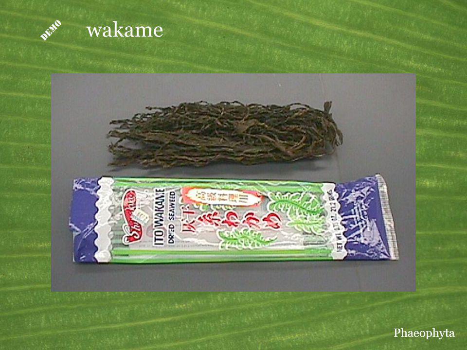 D wakame Wakame is Undaria pinnatifida, a kelp used as food in Japan. Phaeophyta