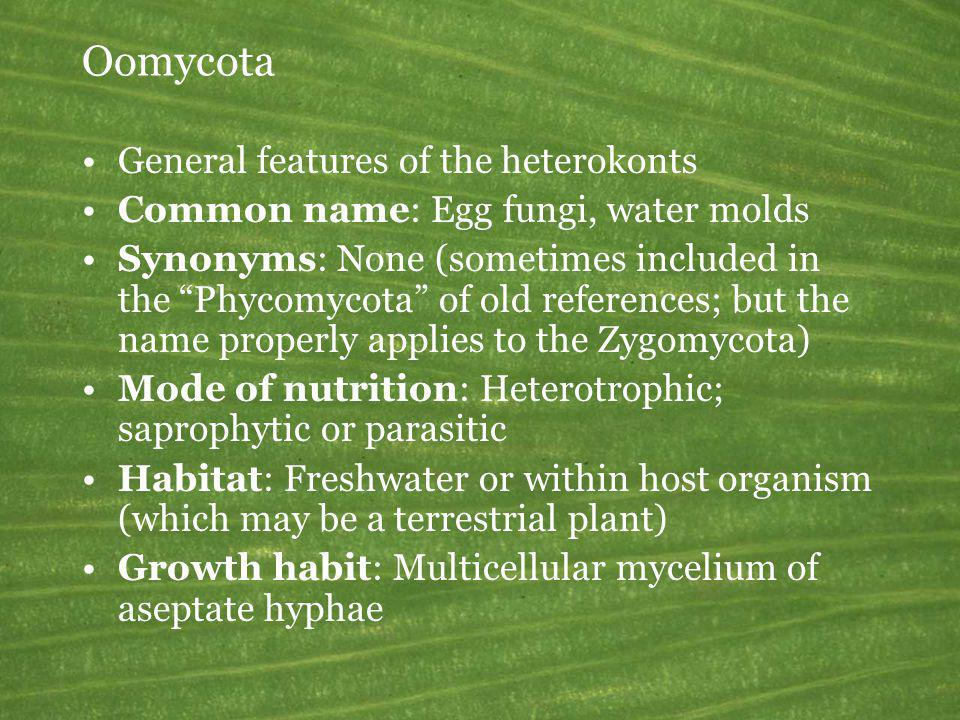 Oomycota General features of the heterokonts