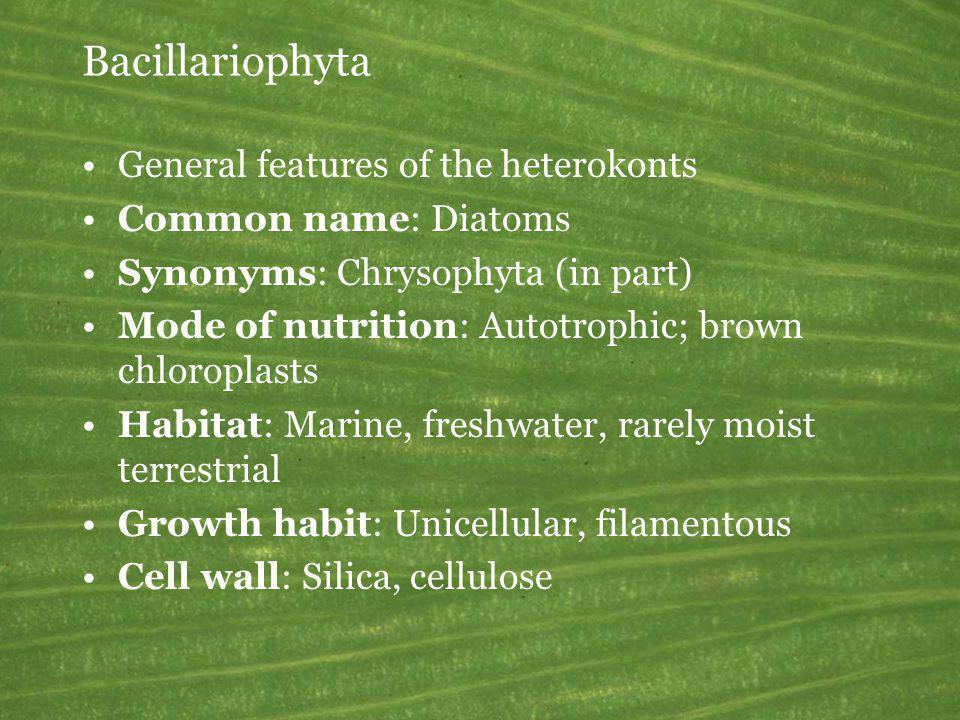 Bacillariophyta General features of the heterokonts
