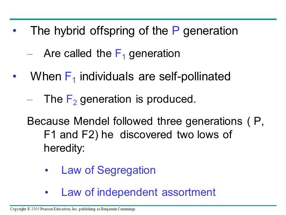 The hybrid offspring of the P generation