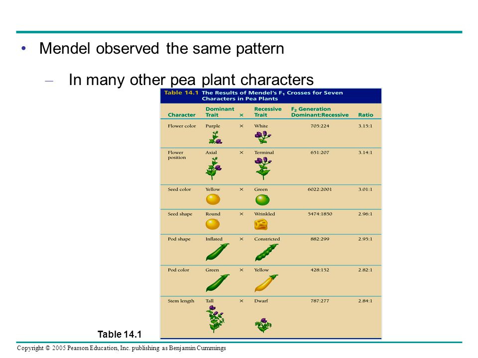 Mendel observed the same pattern In many other pea plant characters