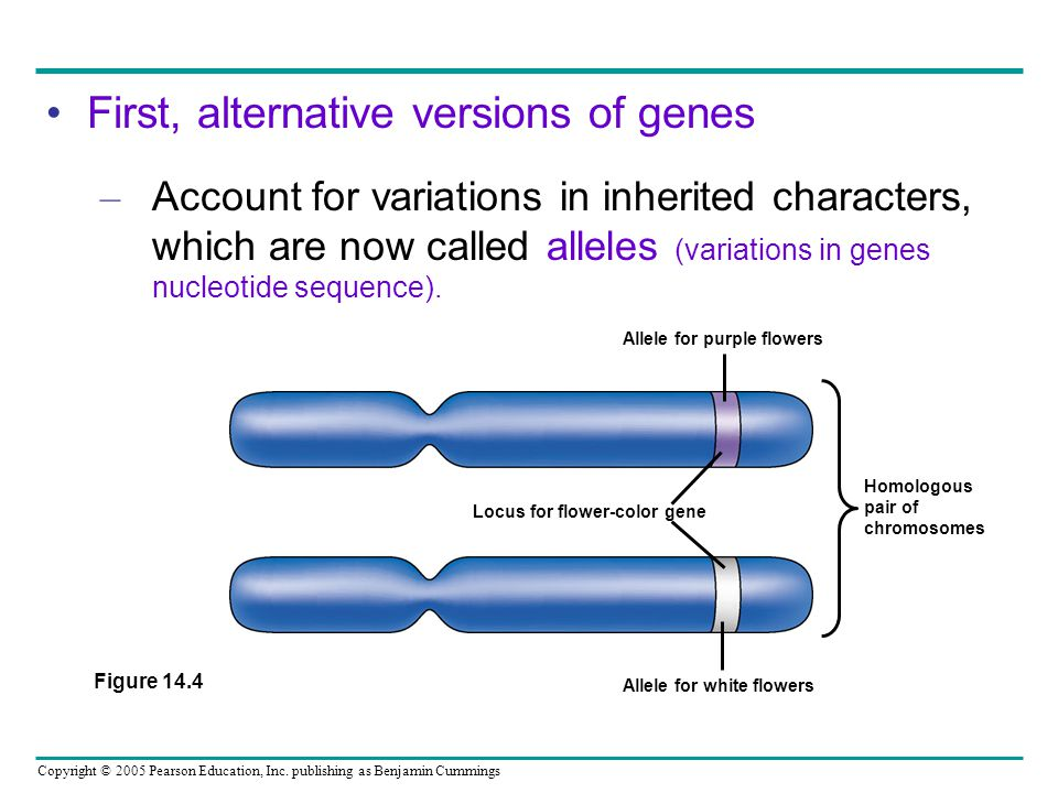 First, alternative versions of genes