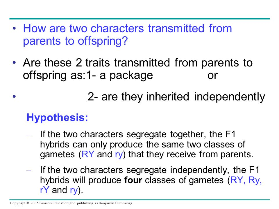 How are two characters transmitted from parents to offspring