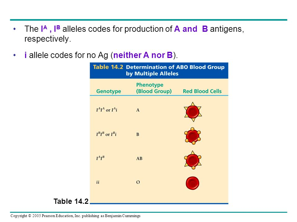 i allele codes for no Ag (neither A nor B).