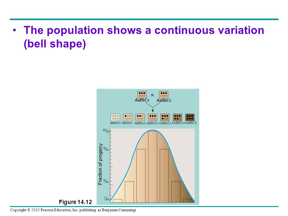The population shows a continuous variation (bell shape)