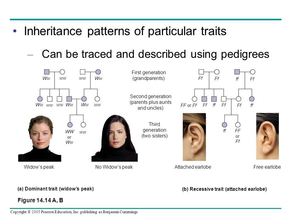 Inheritance patterns of particular traits