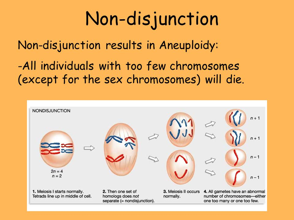 Non-disjunction Non-disjunction results in Aneuploidy: