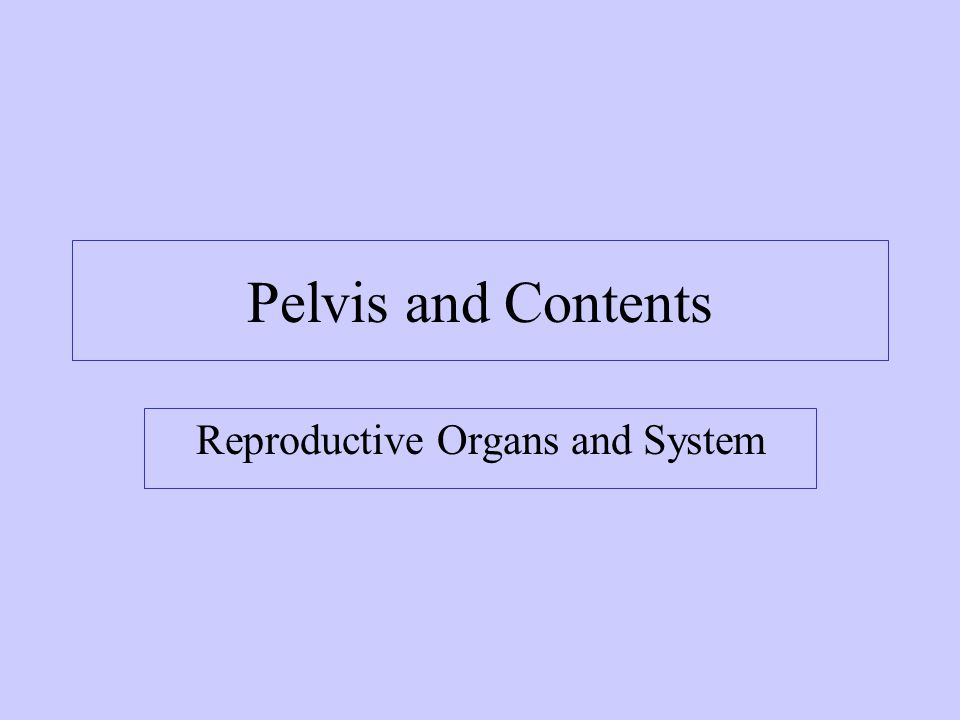 Reproductive Organs and System