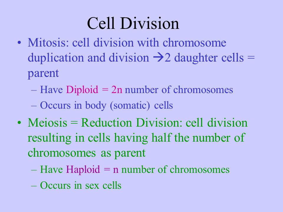 Cell Division Mitosis: cell division with chromosome duplication and division 2 daughter cells = parent.